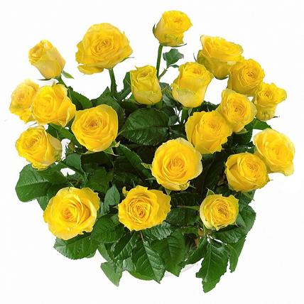 25 роз «Илиос»