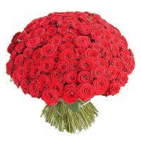 101 красная роза по акции (40 см)