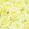 201 роза белая