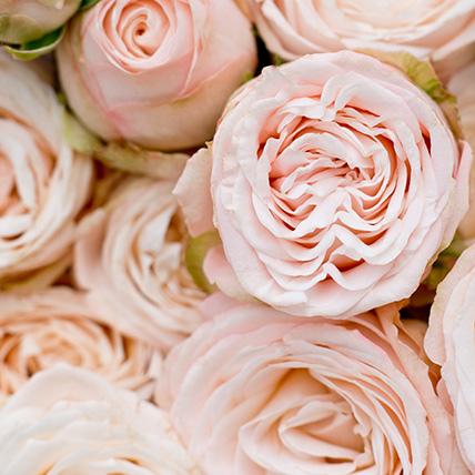 Кустовые пионовидные розы «Бомбастик» в крафте