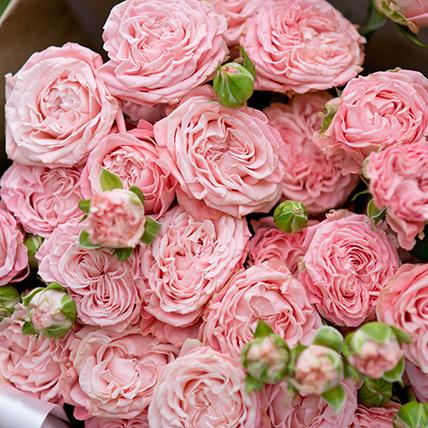 Пионовидная роза кустовая