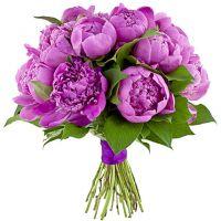 Фиолетовые пионы (19 штук)
