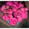 Розовые пионовидные розы в коробке Baby