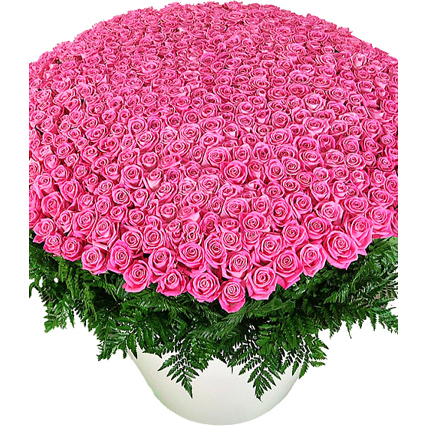 Композиция из 501 розовой розы «Аква»