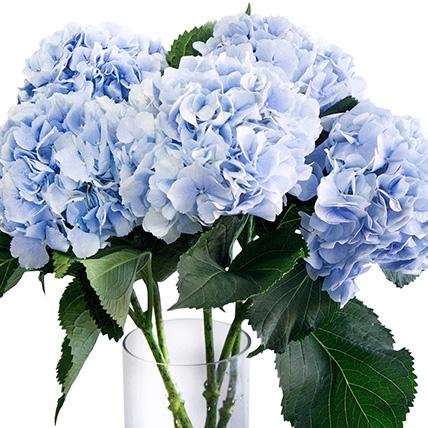 Букет из 5 голубых гортензиий