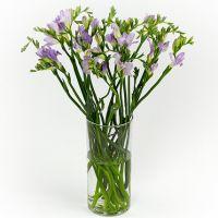 Букет из 19 фиолетовых фрезий