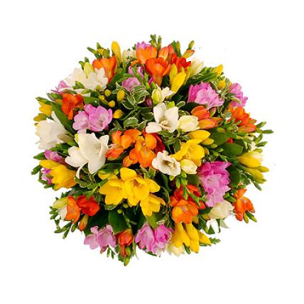 Букет из 49 разноцветных фрезий