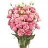 Букет из 19 розовых эустом