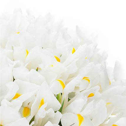Букет из 51 ириса белого