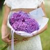 5 фиолетовых гортензий с оформлением