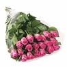 25 розовых роз (40 см)