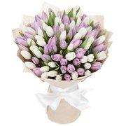 101 тюльпан «Магия»