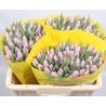 Тюльпан нежно-фиолетовый «Candy prince»