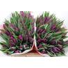 Тюльпан фиолетовый  «Purple flag»
