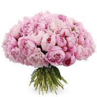 Букет из 41 пиона «Королеве моего сердца»