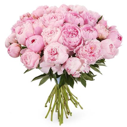 Букет из 35 розовых пионов «Сара Бернар»