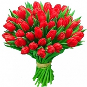 51 тюльпан красный