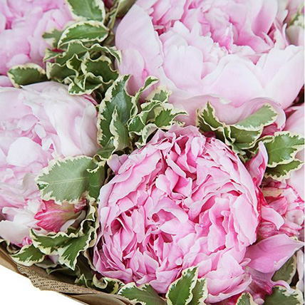 Букет из 7 нежно-розовых пионов