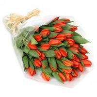 51 тюльпан оранжевый