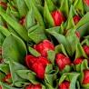 101 тюльпан красный