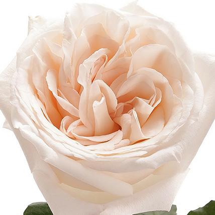 Букет из пионовидных роз «White O'hara»