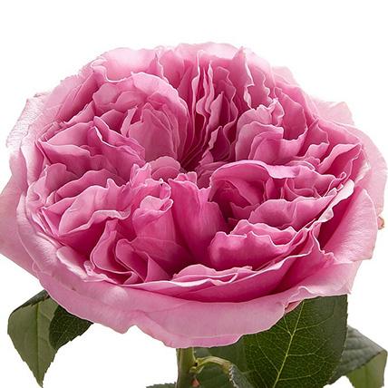Букет из пионовидных роз Остина «Miranda»