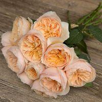 Букет из пионовидных роз Остина «Juliet»
