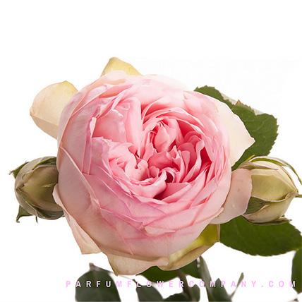 Букет из нежно-розовых пионовидных роз «Bridal piano»