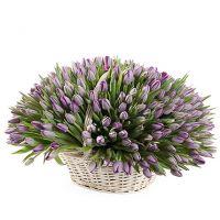 201 фиолетовый тюльпан в корзине