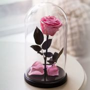 Вечная роза в стеклянной колбе розовая