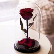 Вечная роза в стеклянной колбе бордовая