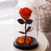 Вечная роза в стеклянной колбе оранжевая