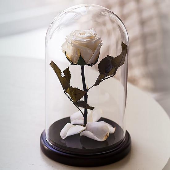 Вечная роза в стеклянной колбе белая