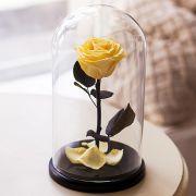Вечная роза в стеклянной колбе желтая