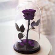Вечная роза в стеклянной колбе фиолетовая