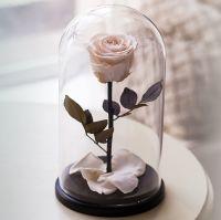 Вечная роза в стеклянной колбе кремовая