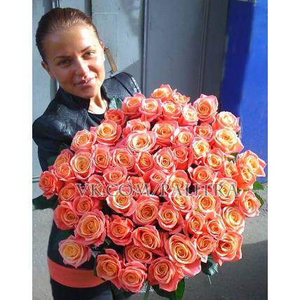 51 коралловая роза «Мисс Пигги»