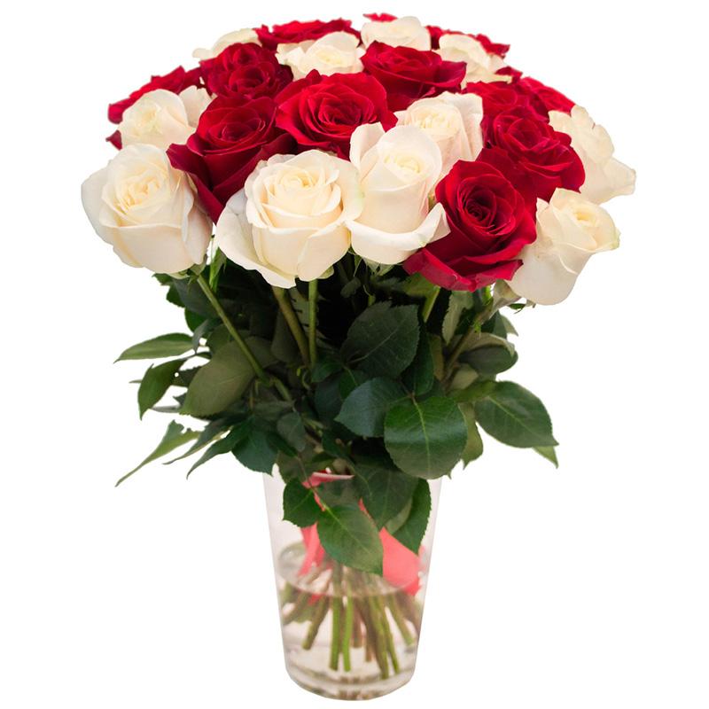 25 роз красных и белых (50 см)