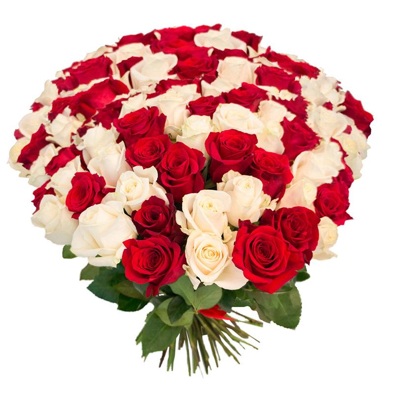 101 роза красная и белая
