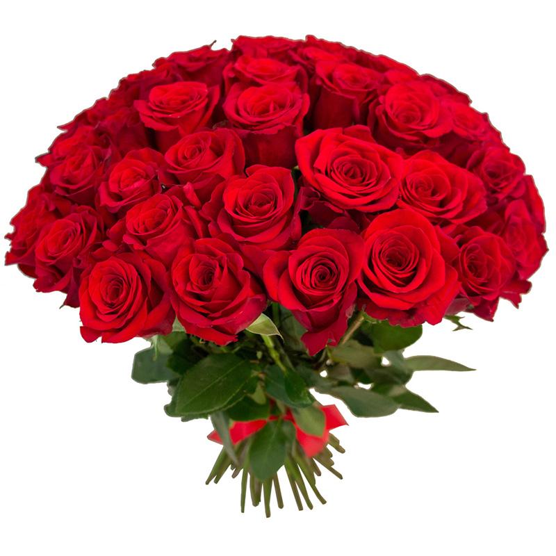 51 красная роза