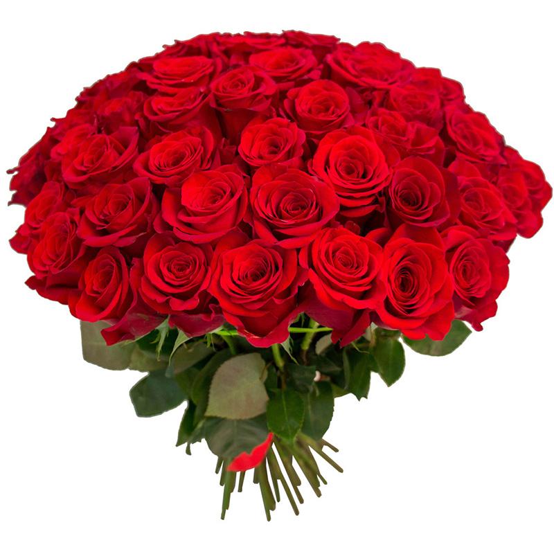 75 красных роз (50 см)