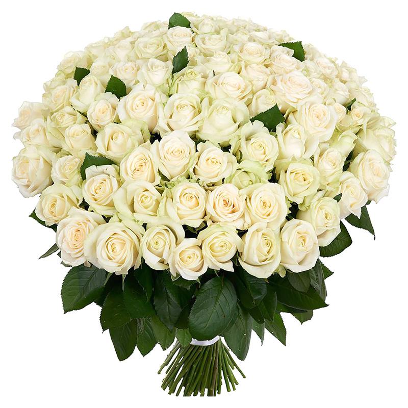 101 белая роза (50 см)