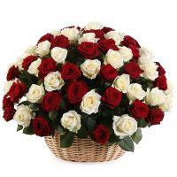 101 красная и белая роза в корзине