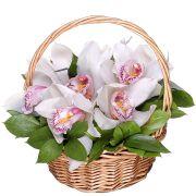 Корзина с орхидеями «Алмазы»