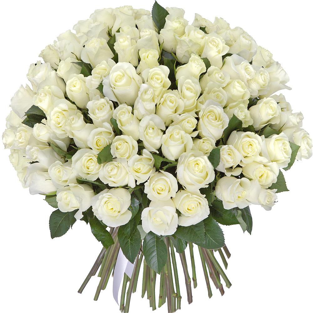75 роз белых 40 см