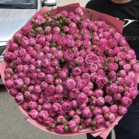 101 пионовидная роза «Мисти бабблс»