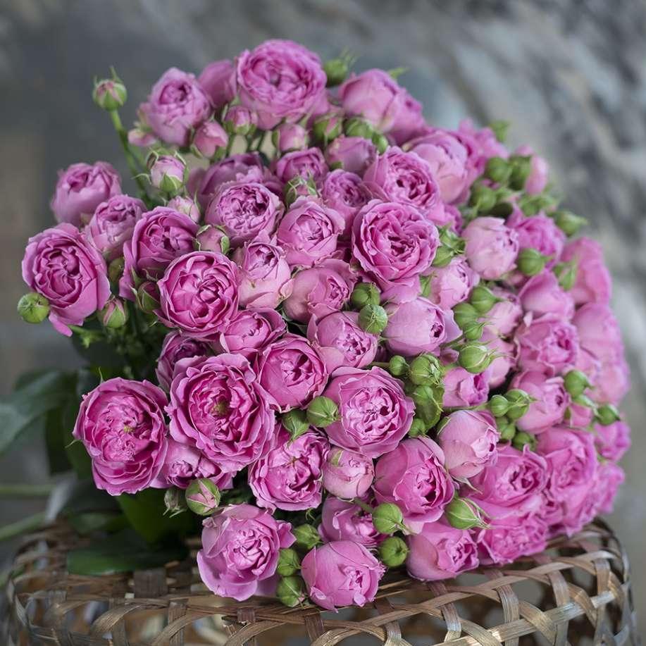 Букет с 29 розами «Мисти бабблс» с широкой лентой