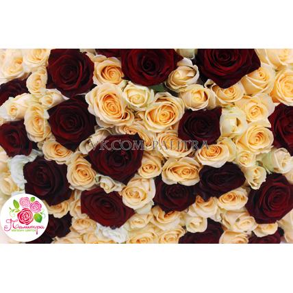 101 роза: бежевая + красная