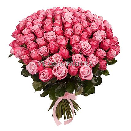 101 розовая роза «Дип Вотер»