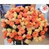 101 роза: кремовая + коралловая